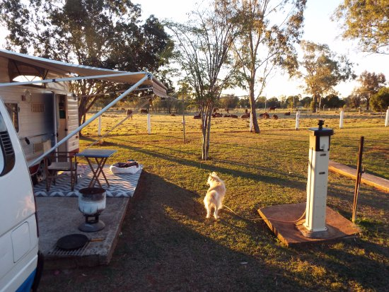 Bell, Australia: The cattle call around about sunset.