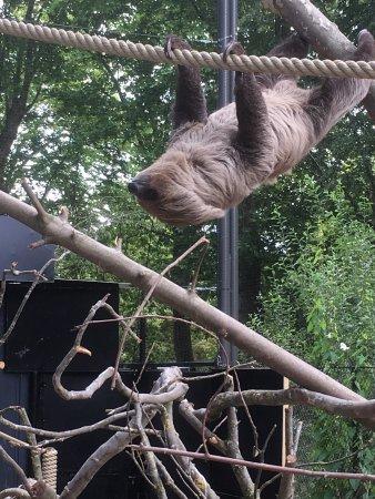 Lille Zoo: photo0.jpg