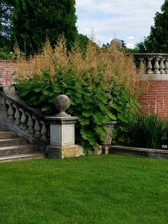 Inn at Shelburne Farms: Plume Poppies in the Formal Garden