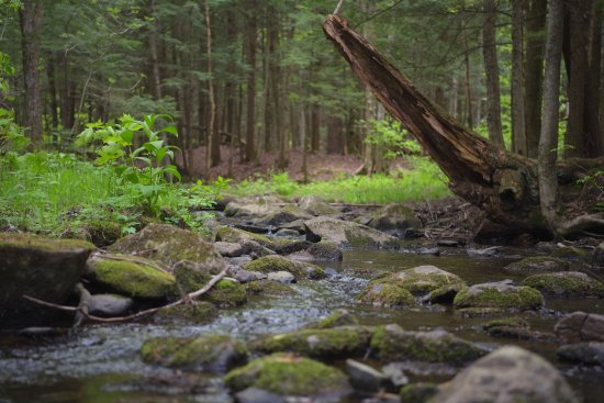 Shefford, Kanada: ruisseau sillonnant le parc
