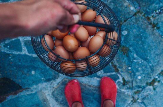 Sant'Angelo in Vado, Italy: eggs from the garden