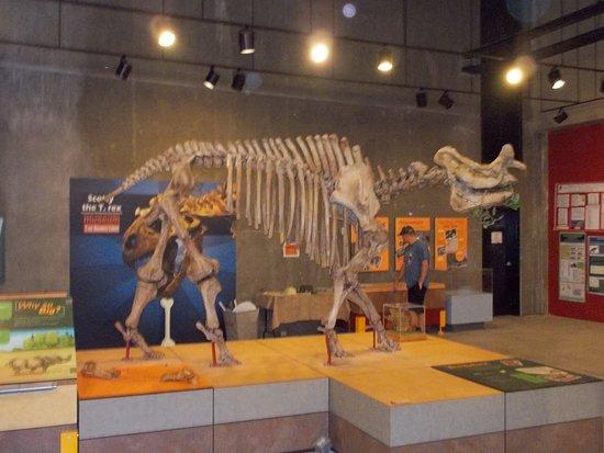 T. Rex Discovery Centre: Dinosaur Skeleton