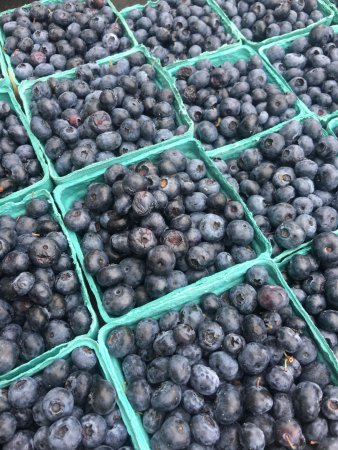 Swarthmore, Πενσυλβάνια: Summer treat: blueberries!