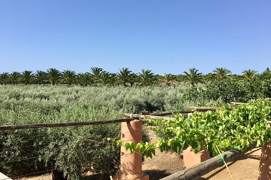Moncarapacho, Portugal: Monterosa Olive Grove views