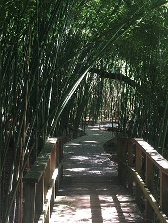 Kanapaha botanical gardens gainesville all you need to - Botanical gardens gainesville fl ...