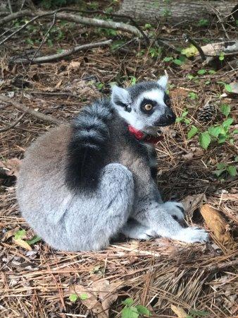 Duke Lemur Center Photo