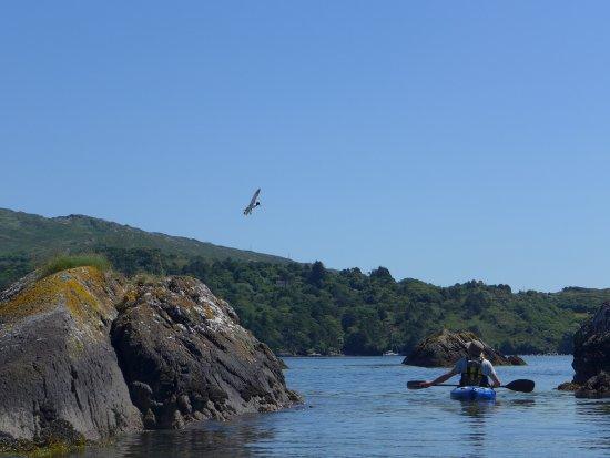 Glengarriff, أيرلندا: Sea Kayaking Tours Through The Spectacular Glengarriff Bay