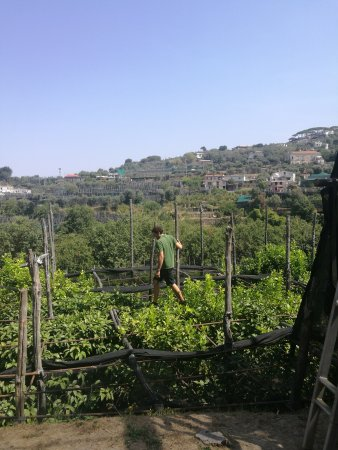 La Masseria Farm: Brilliant experience. See how olives and lemons are harvested. Enjoy a gorgeous Italian meal cre