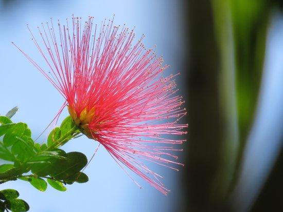 Fleur Au Jardin De Balata Photo De Jardin De Balata Fort De