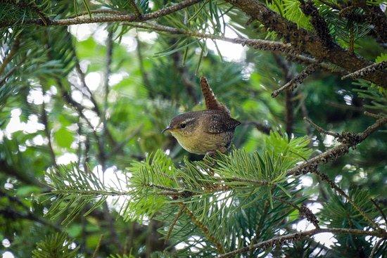 Greece Bird Tours: A shy one that I forgot the name
