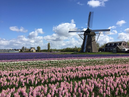 Kerkdriel, Nederland: Holland countryside