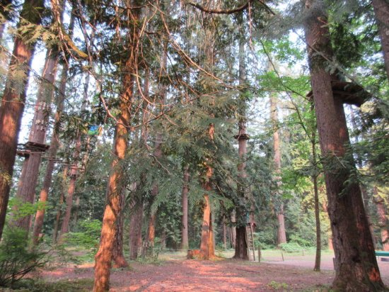 WildPlay Element Parks Maple Ridge : Wild play Park
