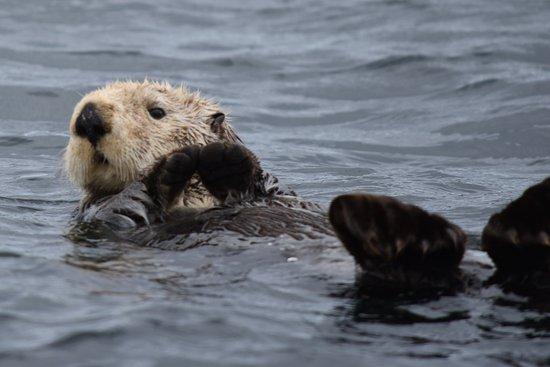 Sitka, AK: Otter