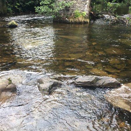 Cloud Farm Camping: The stream