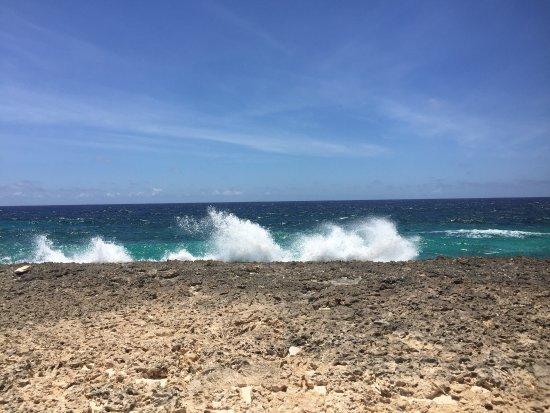 Bonaire National Marine Park: photo4.jpg