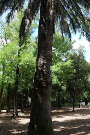 Parc Magnol