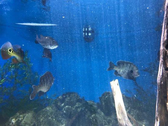 Picture Of Florida Keys Aquarium Encounters