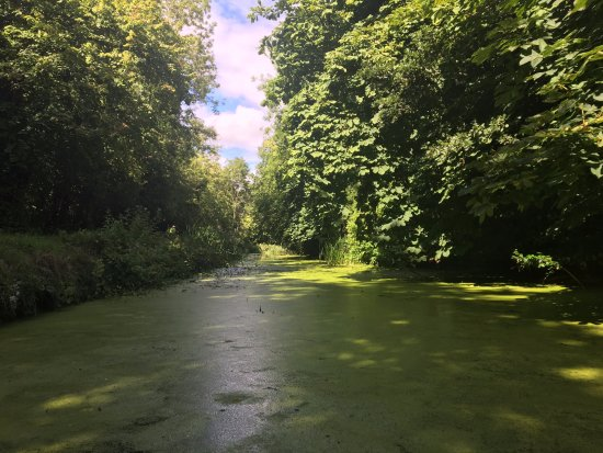 "Drogheda, Ireland: The ""swamp"""