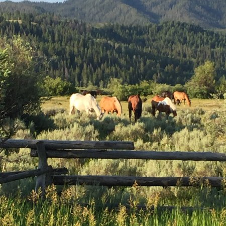 Moose Head Ranch: horses out to pasture