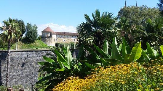 Jardin Botanique : 20170803_160312_large.jpg