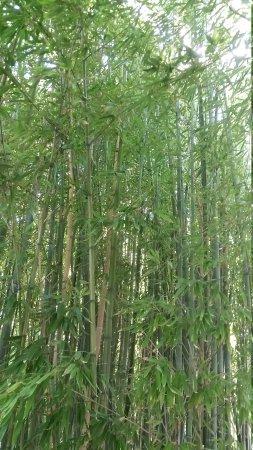 Jardin Botanique : 20170803_160214_large.jpg