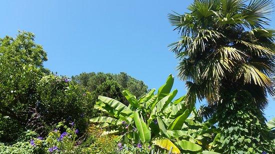 Jardin Botanique : 20170803_160542_large.jpg
