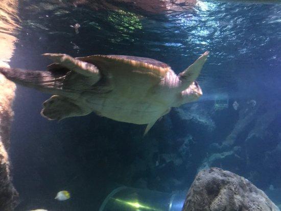 Blue Reef Aquarium : photo0.jpg