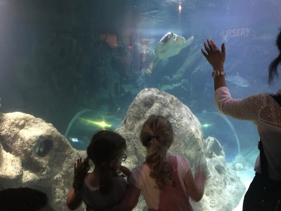 Blue Reef Aquarium : photo1.jpg