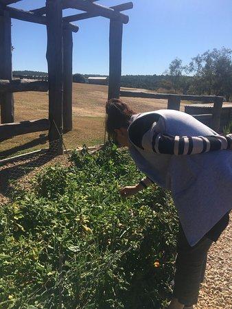 Grandchester, Australia: Around the grounds