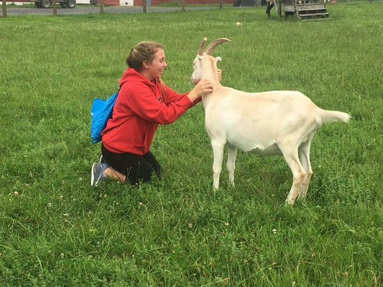 High Falls, NY: My daughter fell in love with the goats.