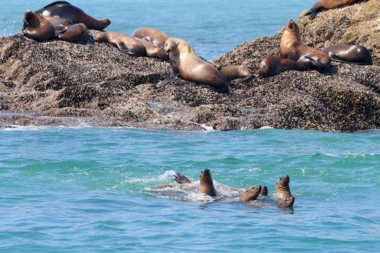 Archipelago Wildlife Cruises: Harbour seals
