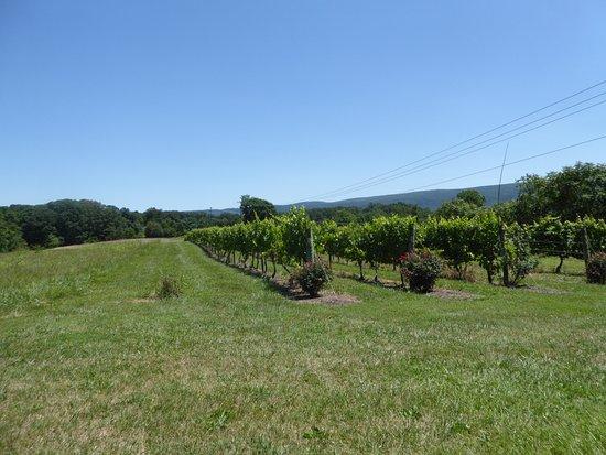 Edinburg, VA: Vines