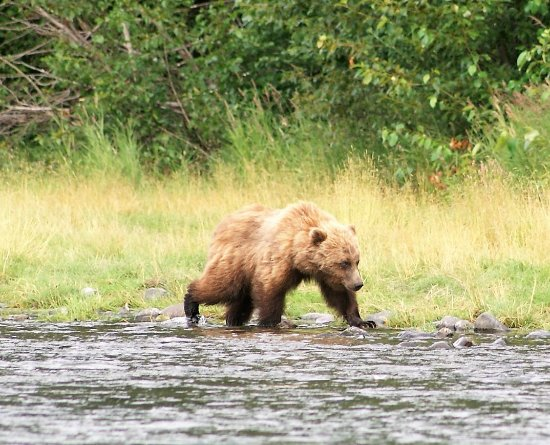 Alaska River Adventures - Day Tours: This was so cool and I felt very safe in the raft