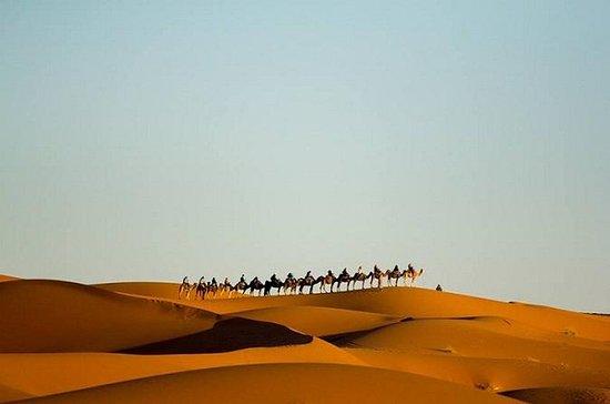 Paseos en camello en el desierto...