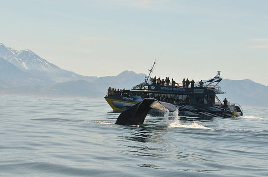 Kaikoura Whale Watch Day Tour from...