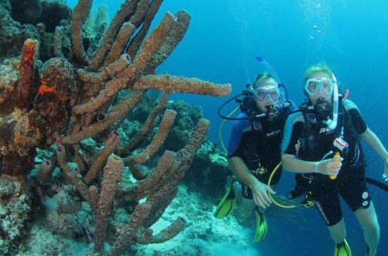 Sertifisert dykking på Curacao