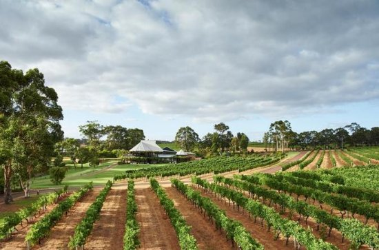 Vasse Felix Margaret River: Winery ...