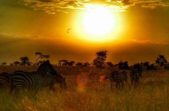 8-Day Best of Kenya and Tanzania ...