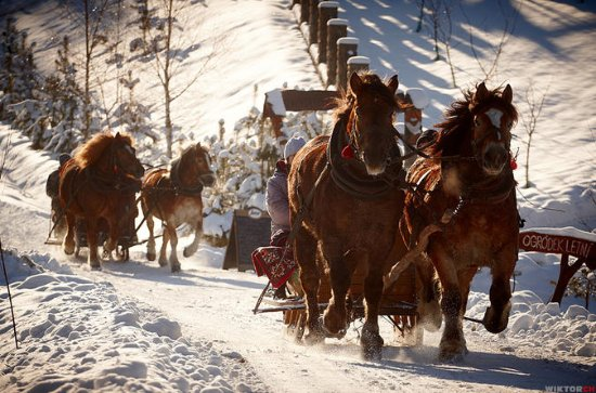 Horse Sleigh Ride in the Polish...