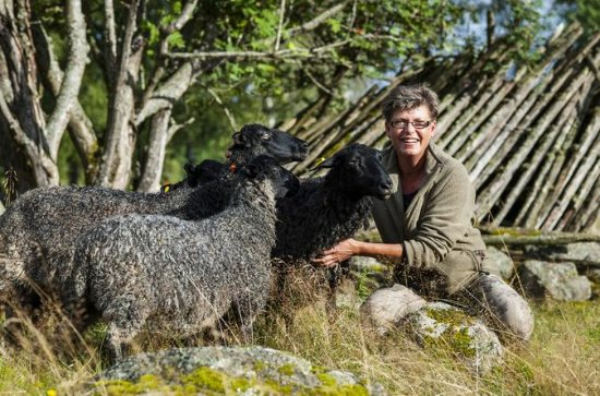 Picknick med Sheep 2-Day Farm Tour