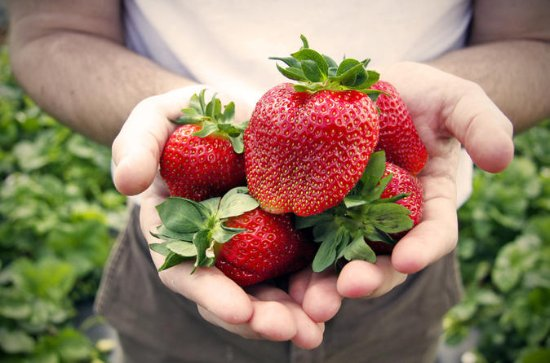 Private Full-Day Strawberry Picking...