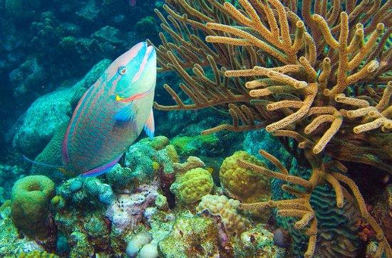 Excursion en bord de mer à Bonaire...