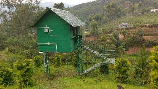 Camp Noel: tree house