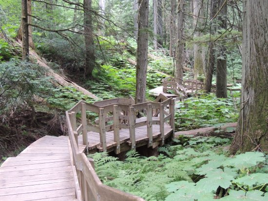 Giant Cedars Boardwalk Trail: Der Broadwalk