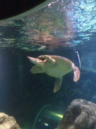 Blue Reef Aquarium : photo2.jpg