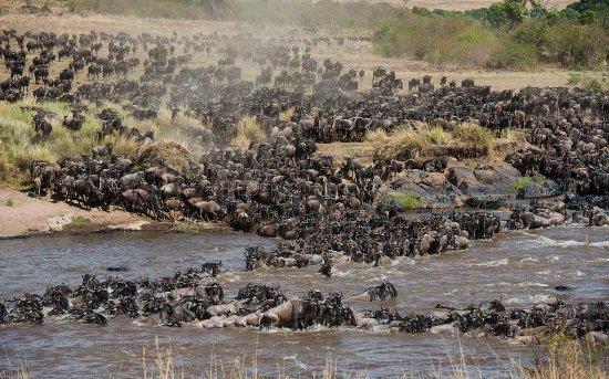 Arusha Region, Tanzanya: Migration