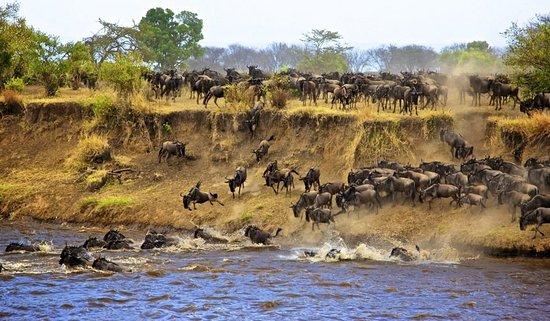 Arusha Region, Tanzanya: Wilderbeest Migration
