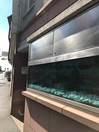 Hotel Goldener Karpfen: Eingang zum Goldenen Karpfen, das Aquarium ist aber leer