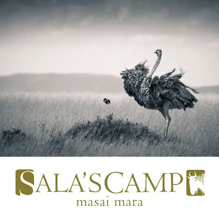 Sala's Camp: An ostrich and roller on safari.
