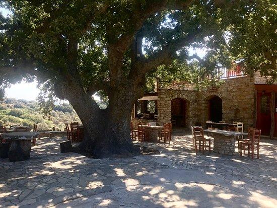 331eb5e9982 Ταβέρνα Καφέ Καλλιόπη, Νάξος - Κριτικές εστιατορίων - TripAdvisor